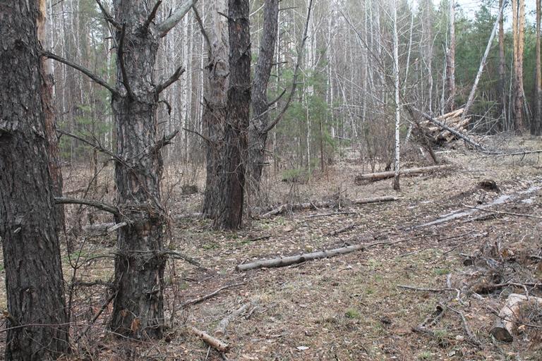 Завез бабу в лес фото 65-389