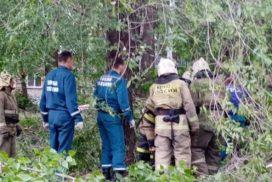 Ульяновский СУ СК возбудил уголовное дело по факту травмирования ребенка упавшим деревом