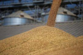 Рост экспорта зерна и продуктов его переработки с территории Ульяновской области на 73 процента